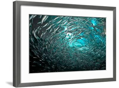 Fishes-Albert Lin-Framed Photographic Print