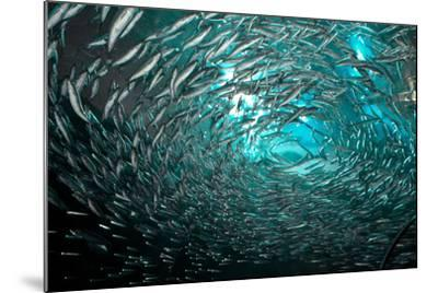 Fishes-Albert Lin-Mounted Photographic Print