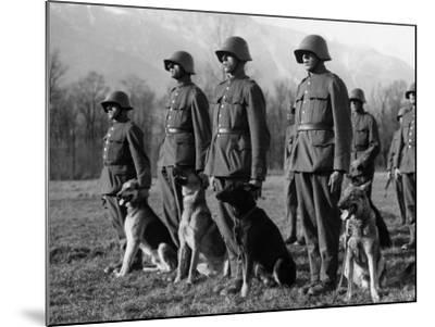 Army Dogs--Mounted Photographic Print