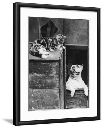 Truce--Framed Photographic Print