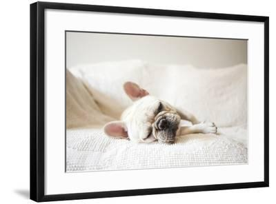 Usa, New York State, New York City, Portrait of French Bulldog Sleeping on Sofa-Jessica Peterson-Framed Photographic Print
