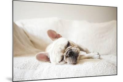 Usa, New York State, New York City, Portrait of French Bulldog Sleeping on Sofa-Jessica Peterson-Mounted Photographic Print