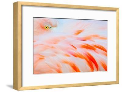 Flamingo-Tom Winstead-Framed Photographic Print