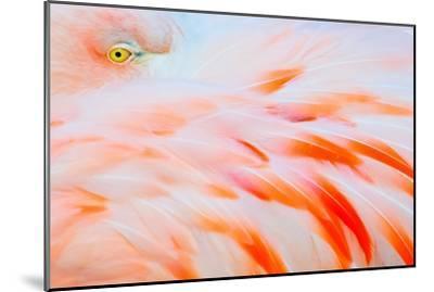 Flamingo-Tom Winstead-Mounted Photographic Print