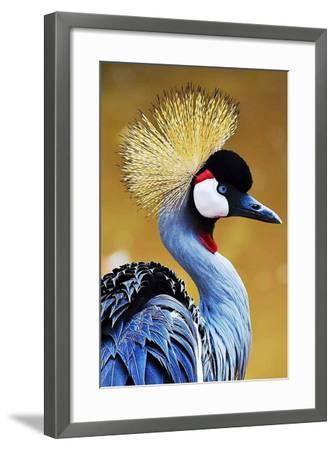 Exotic Bird-Eugenio Carrer-Framed Photographic Print
