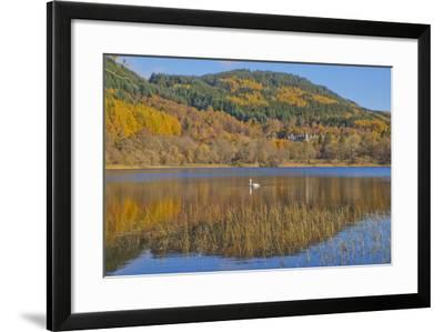 Autumn Colours in the Trossachs, Scotland-Dennis Barnes-Framed Photographic Print
