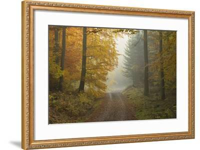 Path through Beech Forest in Autumn, Spessart, Bavaria, Germany-Michael Breuer-Framed Photographic Print
