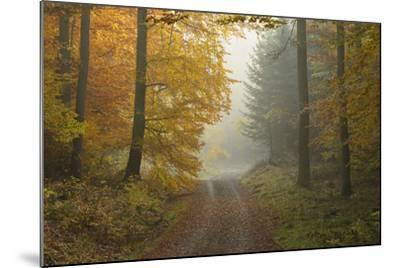 Path through Beech Forest in Autumn, Spessart, Bavaria, Germany-Michael Breuer-Mounted Photographic Print