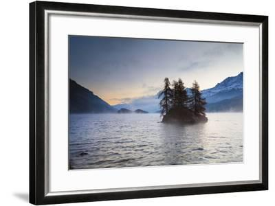 Larch Trees on Island in Lake Sils, Engadin, Switzerland-F. Lukasseck-Framed Photographic Print