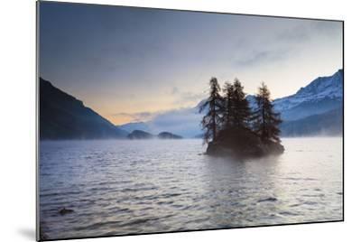 Larch Trees on Island in Lake Sils, Engadin, Switzerland-F. Lukasseck-Mounted Photographic Print