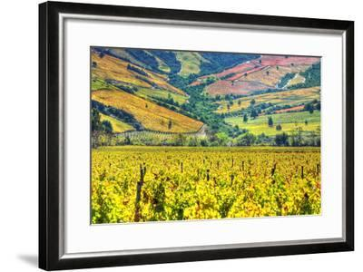 Vineyards (Hdr) - Valle Colchagua-Fotograf??as Jorge Le??n Cabello-Framed Photographic Print