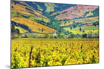 Vineyards (Hdr) - Valle Colchagua-Fotograf??as Jorge Le??n Cabello-Mounted Photographic Print