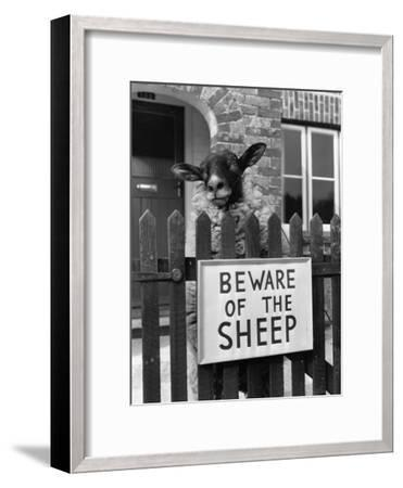Sheep Guard-Cole-Framed Photographic Print