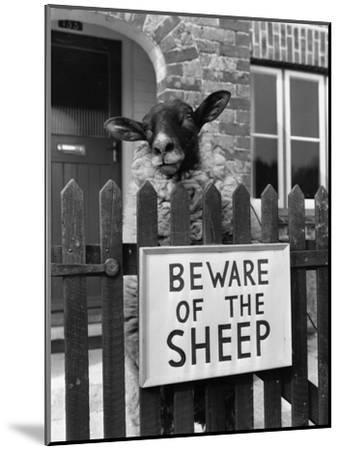 Sheep Guard-Cole-Mounted Photographic Print
