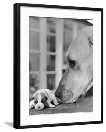 Dog's Dinner?-Express Newspapers-Framed Photographic Print