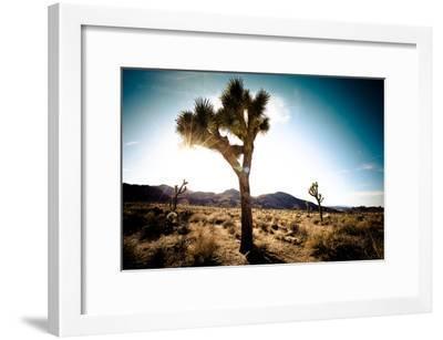 Usa, California, Joshua Tree National Park, Hidden Valley, Joshua Trees-Sergio Pitamitz-Framed Photographic Print