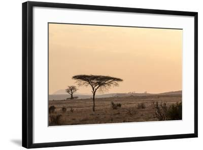 Acacia and Baobab Trees-Claudia Uribe-Framed Photographic Print