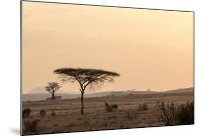 Acacia and Baobab Trees-Claudia Uribe-Mounted Photographic Print