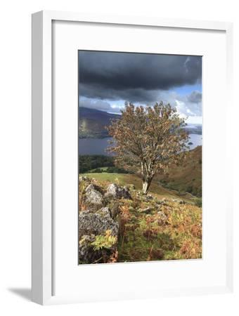 Rowan Tree Ashness Fell, Lake District-Dave Porter Peterborough Uk-Framed Photographic Print