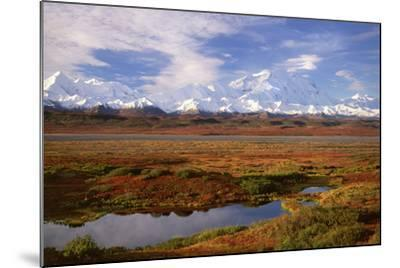Tundra and Kettle Pond in Denali National Park, Alaska in the Fall. Mount Mckinley in the Backgroun-Mint Images - David Schultz-Mounted Photographic Print