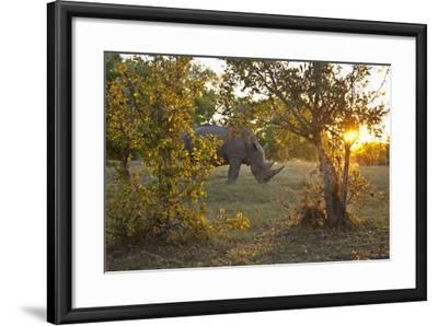 Rhinoceros in the Mosi-O-Tunya National Park-Maremagnum-Framed Photographic Print