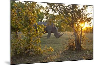 Rhinoceros in the Mosi-O-Tunya National Park-Maremagnum-Mounted Photographic Print