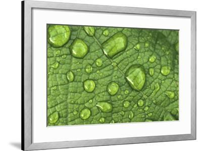 Water Drops on a Leaf-James Gritz-Framed Photographic Print