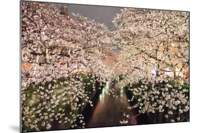 Sakura at Nakameguro-By CaDs-Mounted Photographic Print