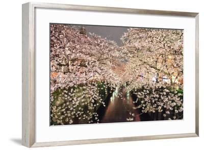 Sakura at Nakameguro-By CaDs-Framed Photographic Print