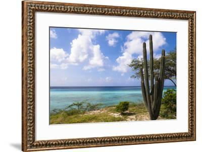 Scenic with Cactus by Coast, Mangel Halto Beach, Aruba, Lesser Antilles, Caribbean-Alberto Biscaro-Framed Photographic Print