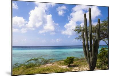 Scenic with Cactus by Coast, Mangel Halto Beach, Aruba, Lesser Antilles, Caribbean-Alberto Biscaro-Mounted Photographic Print