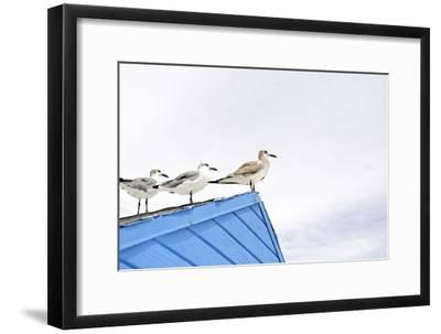 Seagulls on Roof of Kiosk-Axel Schmies-Framed Photographic Print