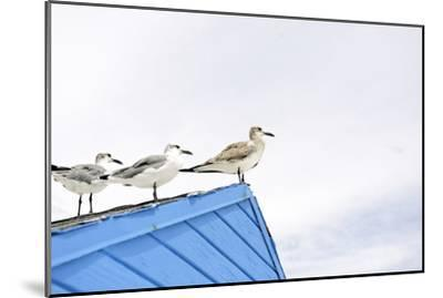 Seagulls on Roof of Kiosk-Axel Schmies-Mounted Photographic Print