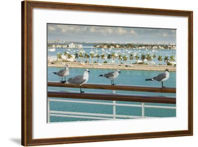 Sea Gulls on Railing of Cruise Ship-Juan Silva-Framed Photographic Print