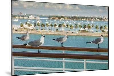 Sea Gulls on Railing of Cruise Ship-Juan Silva-Mounted Photographic Print