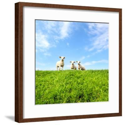 Spring Lambs-MarcelTB-Framed Photographic Print