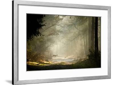 Deer-dewollewei-Framed Photographic Print