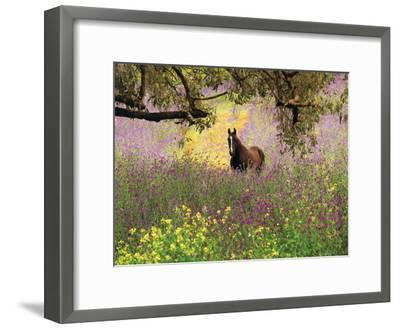 Thoroughbred Horse among Wildflowers in the Chittering Valley, Western Australia-Peter Walton Photography-Framed Photographic Print