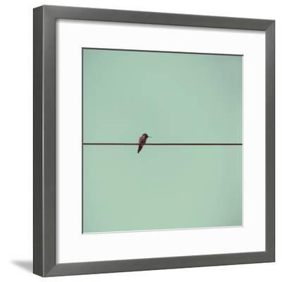 Hummingbird on a Wire-(C) Maite Pons-Framed Photographic Print
