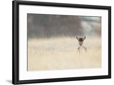 Hello!-MarkBridger-Framed Photographic Print