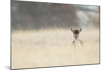 Hello!-MarkBridger-Mounted Photographic Print