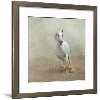 White Lusitano Horse Galloping-Christiana Stawski-Framed Photographic Print