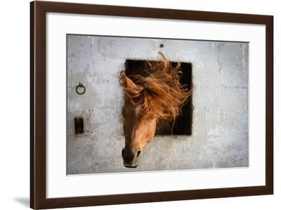 Horse Shaking His Head-Photography taken by Ivan Dupont-Framed Photographic Print
