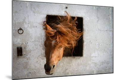 Horse Shaking His Head-Photography taken by Ivan Dupont-Mounted Photographic Print