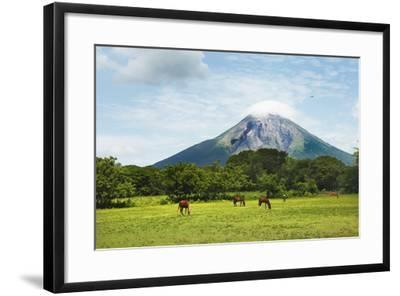 Concepcion Volcano with Grazing Horses-Paul Taylor-Framed Photographic Print