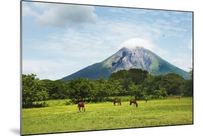 Concepcion Volcano with Grazing Horses-Paul Taylor-Mounted Photographic Print