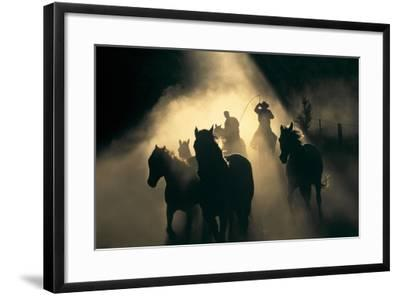 Australian Stock Horses Being Mustered at Stockyard Creek, Victoria, Australia-Peter Walton Photography-Framed Photographic Print