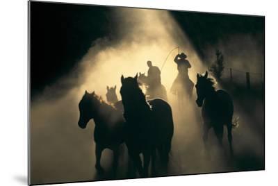 Australian Stock Horses Being Mustered at Stockyard Creek, Victoria, Australia-Peter Walton Photography-Mounted Photographic Print