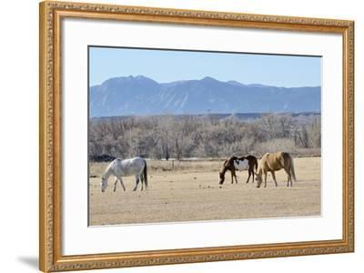 Horses Grazing-RiverNorthPhotography-Framed Photographic Print