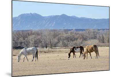 Horses Grazing-RiverNorthPhotography-Mounted Photographic Print